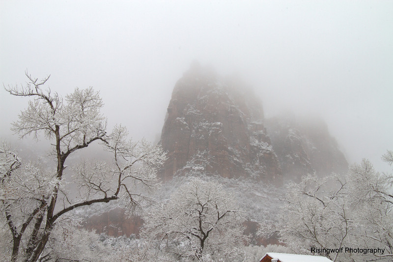 Snowy Morning in Zion